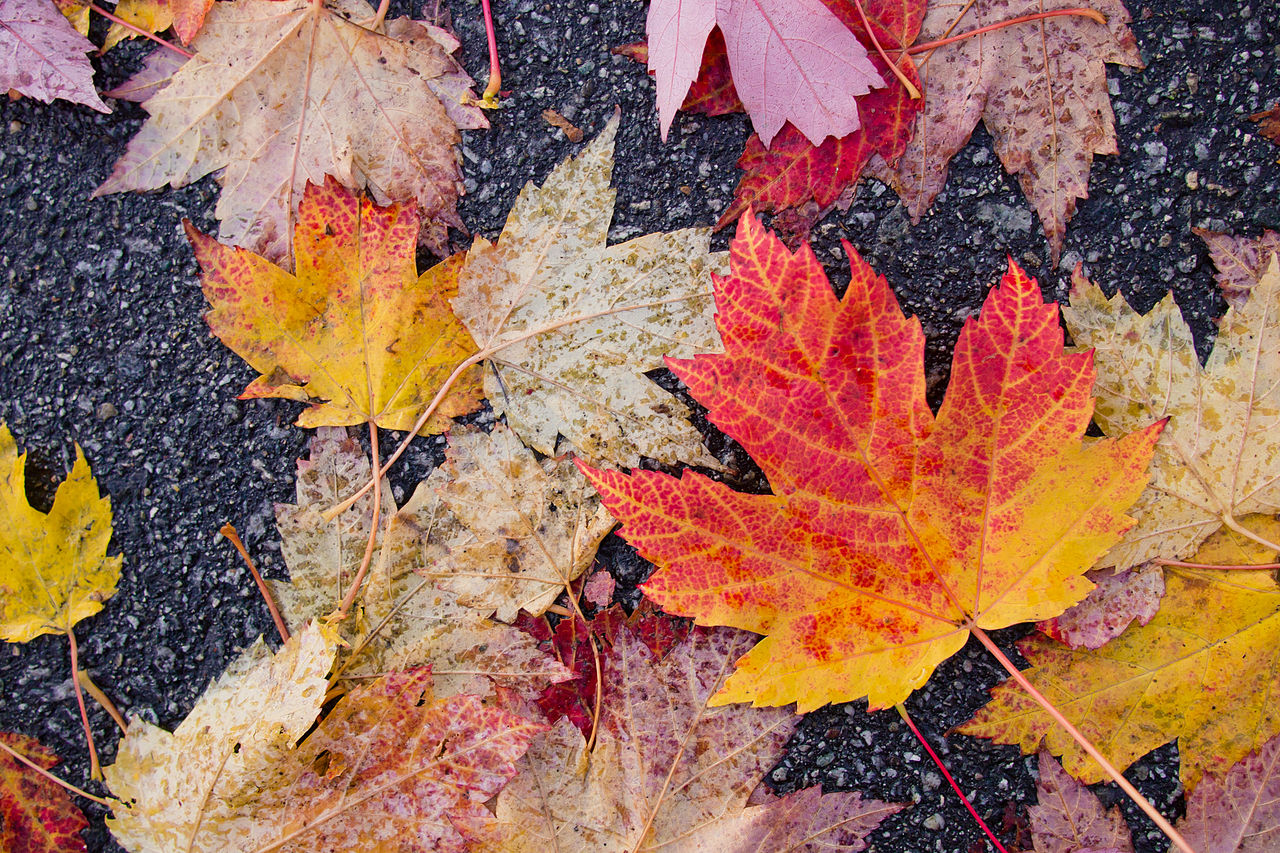 Why Fall Is The Best Time To Replace Your Roof H Amp S Roofing